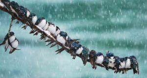 birds cold